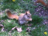 redsquirrel-100-75